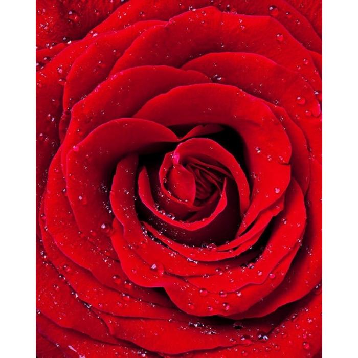 Набор Колор Кит картина со стразами арт.КК.CKC034 Красная роза 40х50