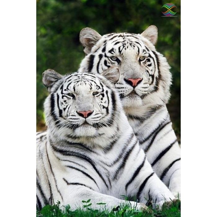 Алмазная мозаика Ah0945 Тигры альбиносы 40х60