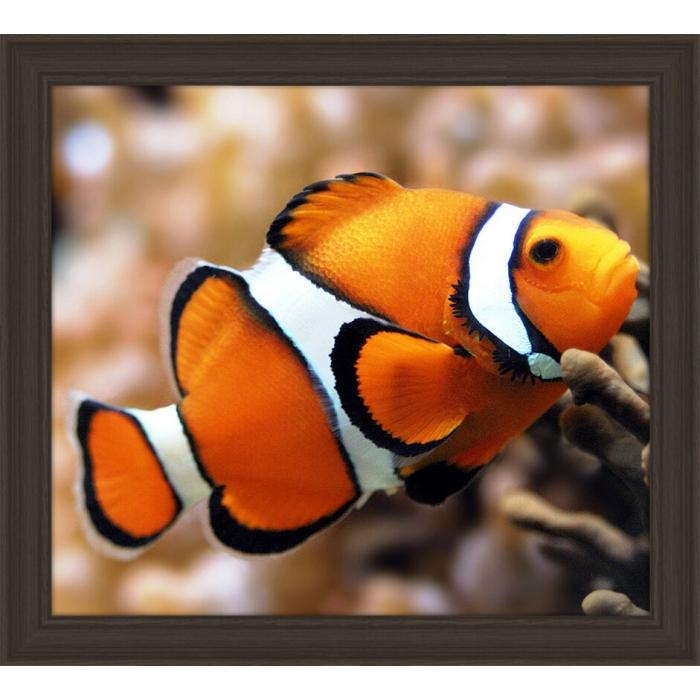 Набор для изготовления картин АЛМАЗНАЯ ЖИВОПИСЬ арт.АЖ.1061 Рыба клоун 20х18 см