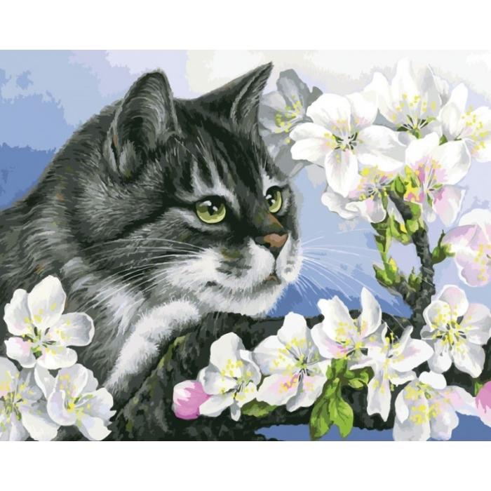 Картины по номерам Белоснежка арт.БЛ.929-AB Яблоневый цвет 40х50 см